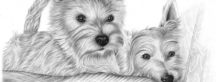 Pencil Portrait of Two Terriers
