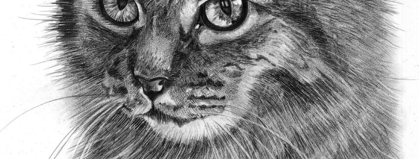 Pencil Drawing of Cat in Loving Memory