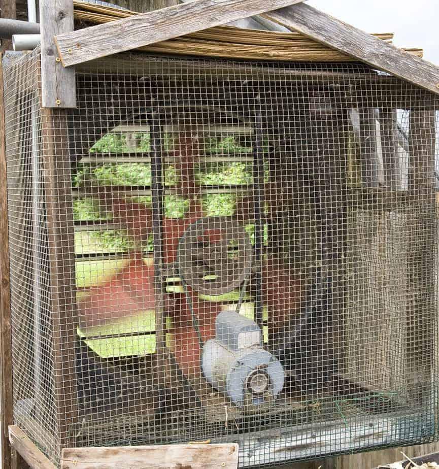 auto vents greenhouse