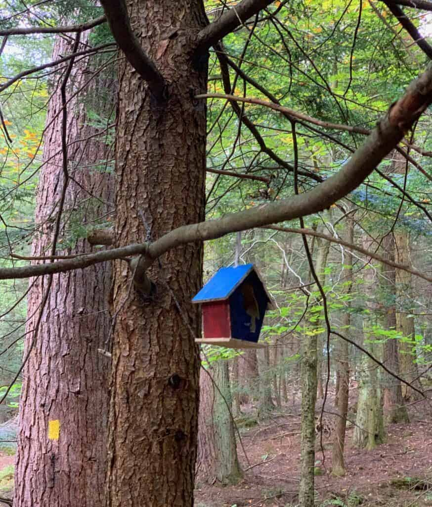 birdhouse in cook forest state park
