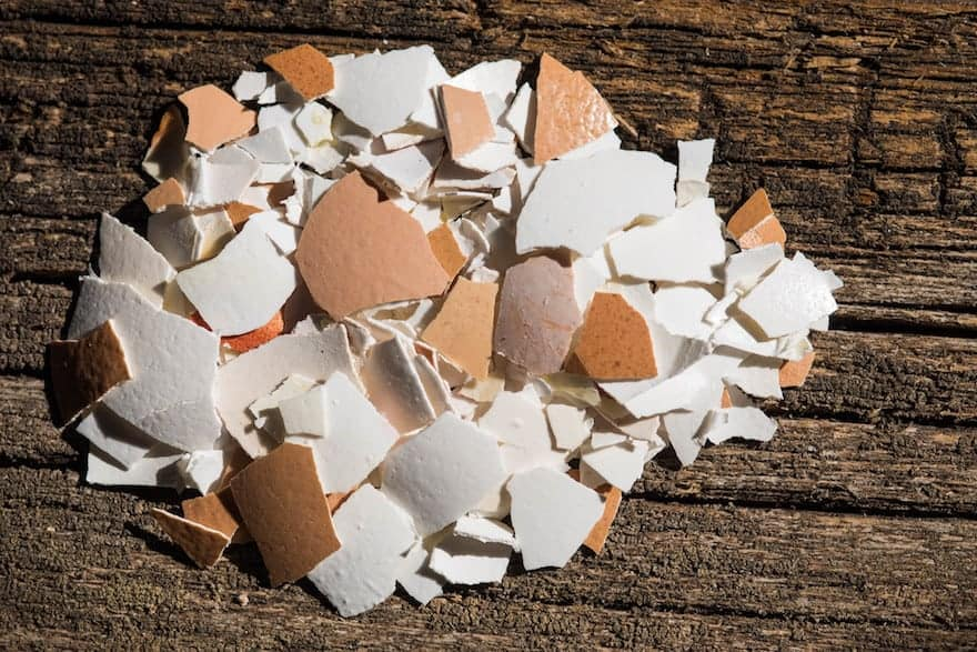 Crushed eggshells