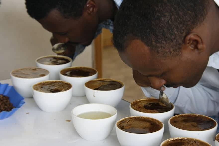 Professional coffee cuppers in Ethiopia taste and grade coffees