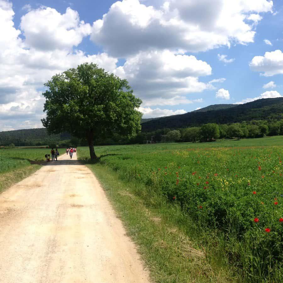 Trekking via Francigena