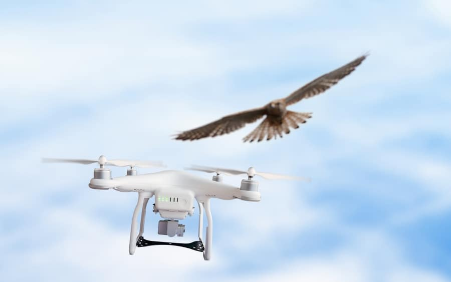 Seagulls Attacked My Drone! How Can I Prevent This? - Let Us