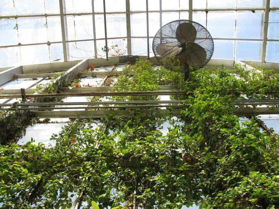 greenhouse circulation fans