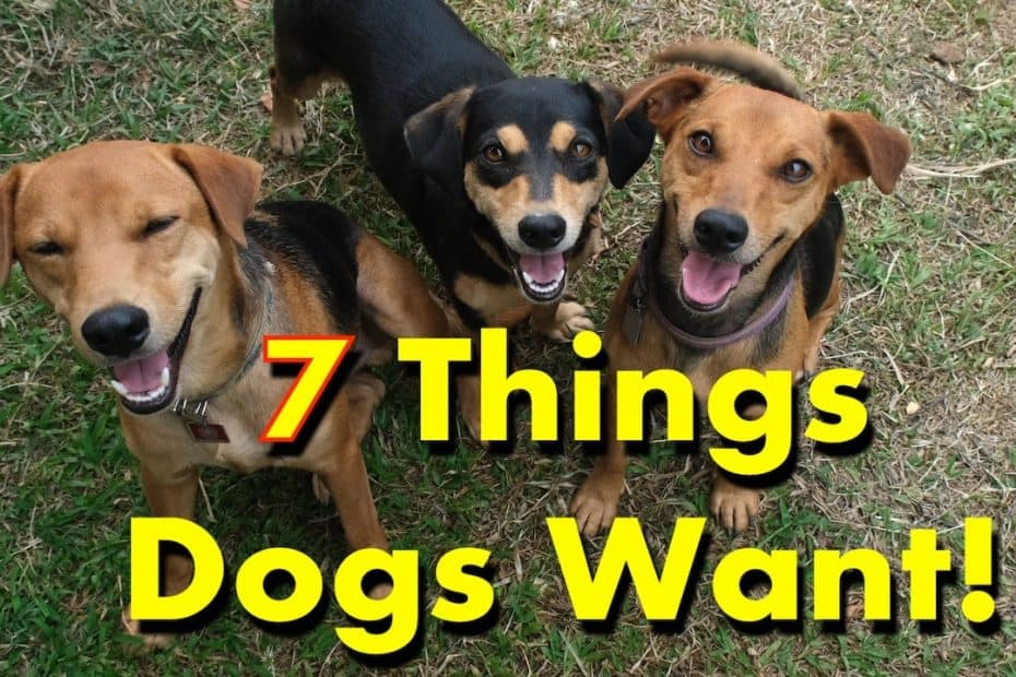 7 Dog Favorite Things You to Buy Today!