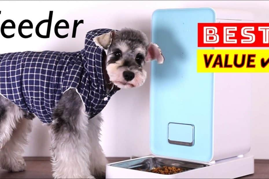 10 Best PET Feeder for Dogs and Cats