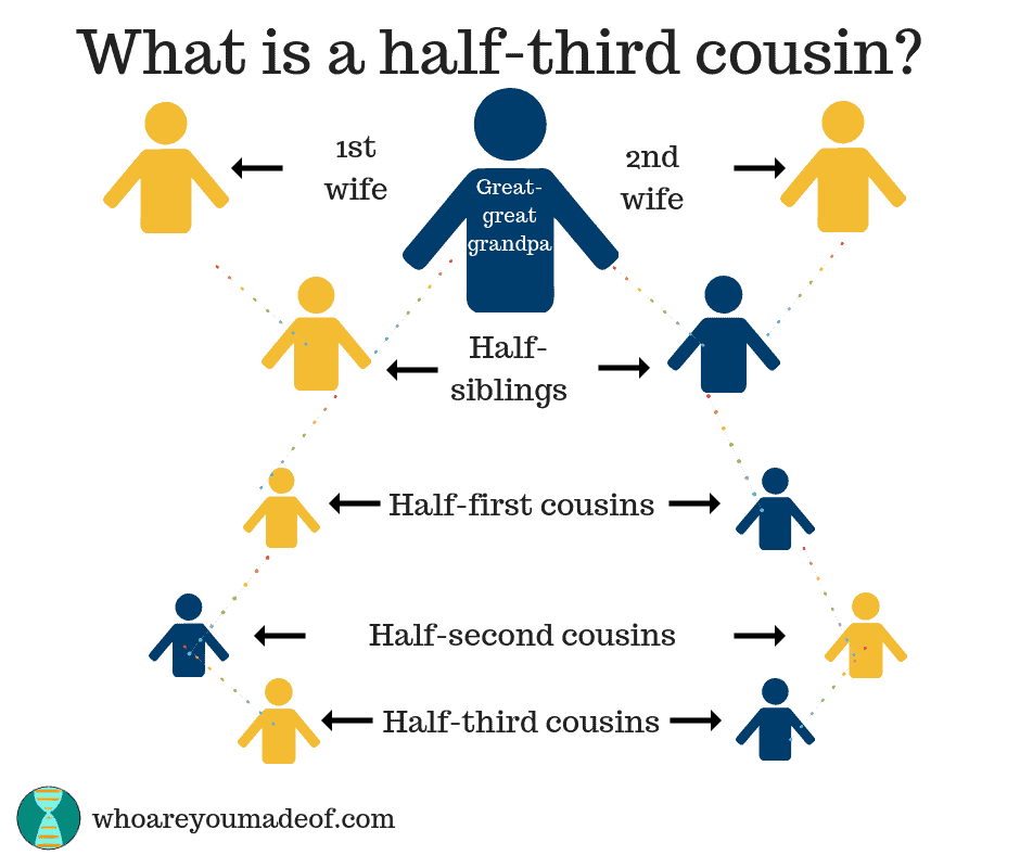 A cousin chart showing what half-third cousins are - they are descended from only one great-great grandparent (instead of a pair of great-great grandparents)