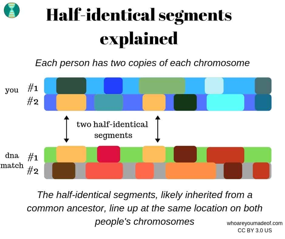 what is a half-identical DNA segment?