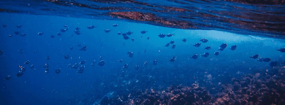 fish in blue sea