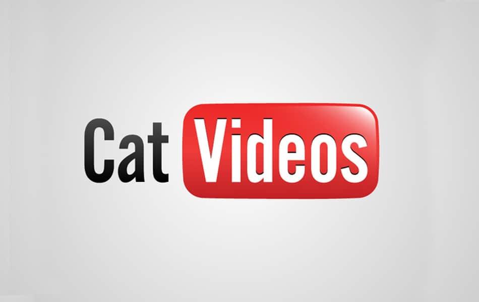 honest logo sul web marketing dei gatti