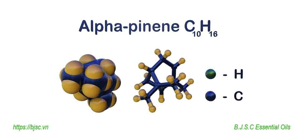 alpha-Pinene-là-gì
