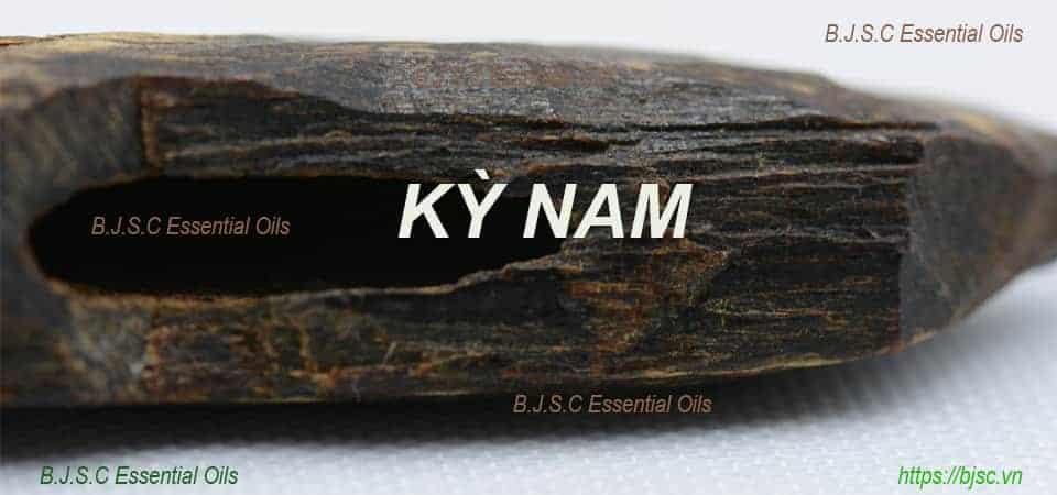 kỳ-nam-nguyên-khối-bjsc-essential-oils