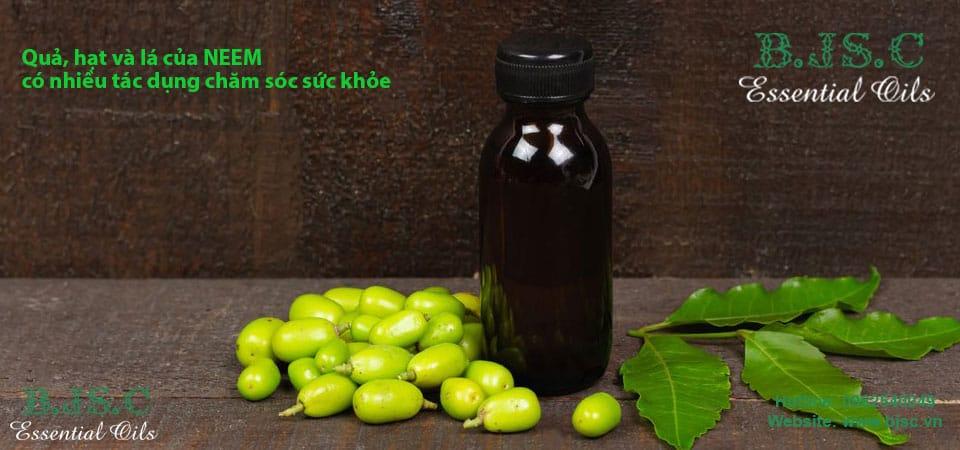Dầu neem nguyên chất nhập khẩu Ấn Độ