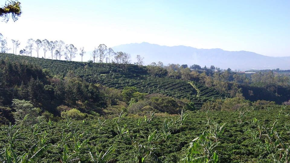 Costa Rica coffee plantation