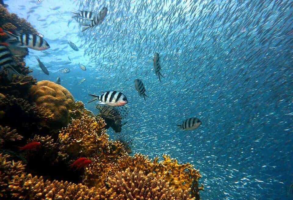Fish and corals in Hawaii