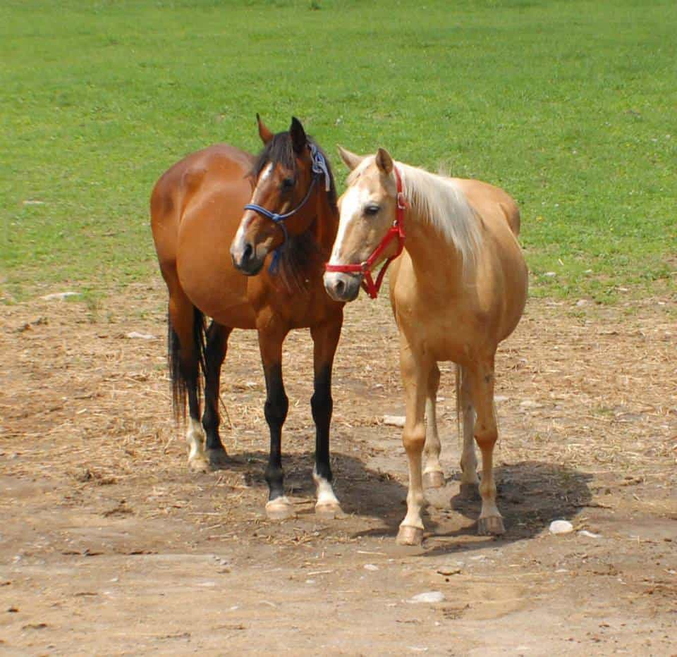Horses Dying leads to animal cruelty investigation