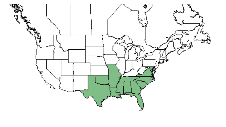 Areas of the United States where American Beautyberry can be found growing wild