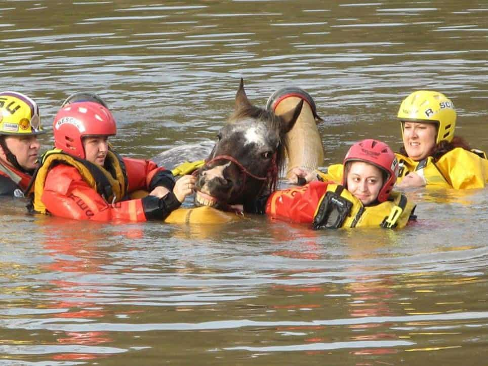 Efforts to save horses and care for them continuein Louisiana. You can help support the Louisiana State Animal Response Team by making a donation hereto the organization.