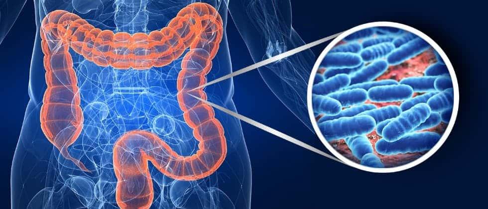 La dieta influenza il microbiota e la nostra salute