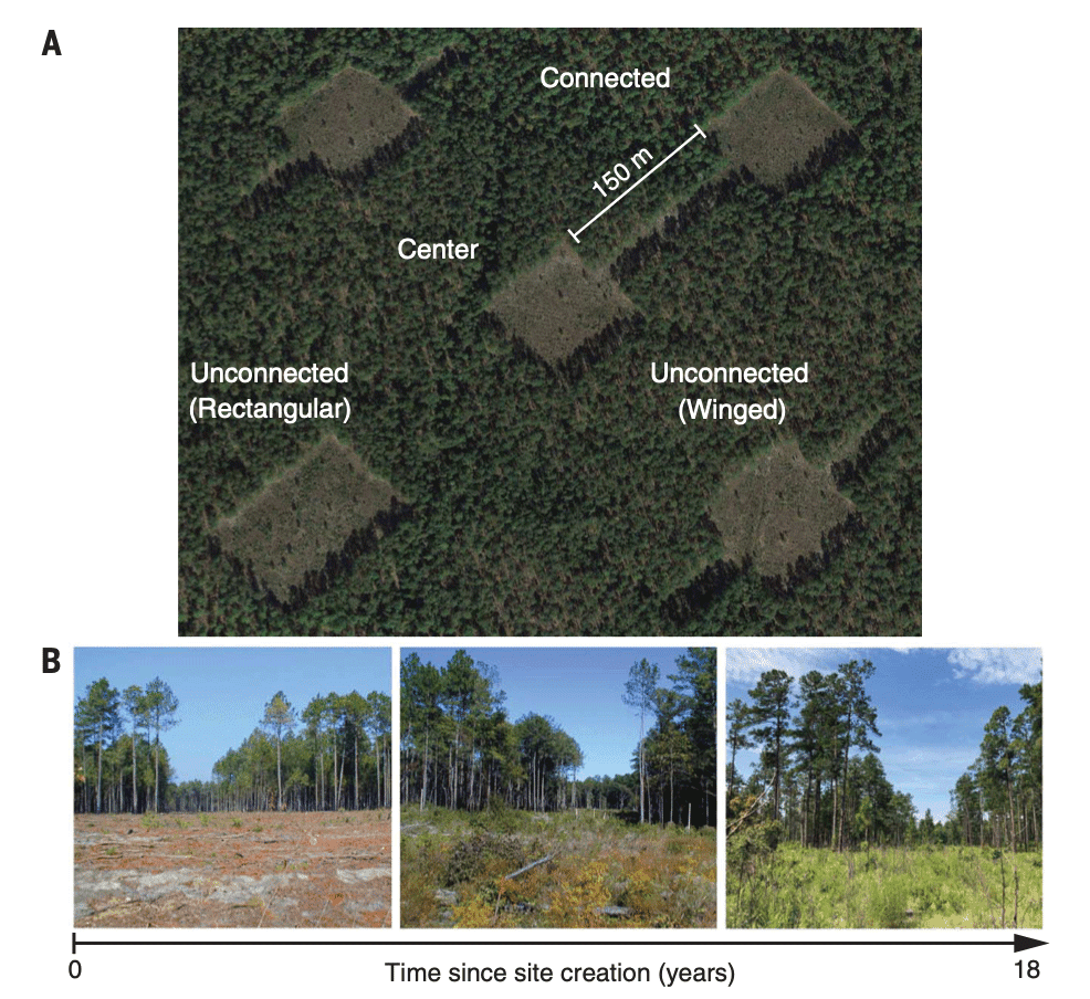 A long-term habitat connectivity experiment. Source: Damschen et al., 2019.
