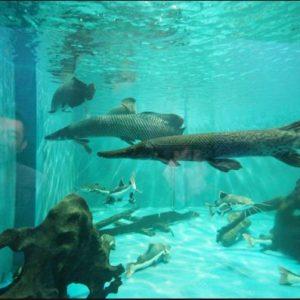 Thế giới hoang dã Thủy cung Đầm Sen
