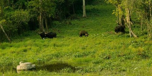 Chapramari Wilderness Camp Animals