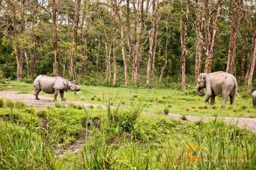 JALDAPARA-WILDLIFE-SANCTUARY
