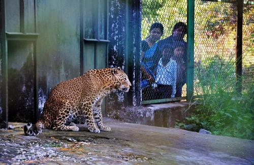Leopard Rescue Centre at Khayerbari