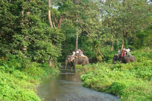 Travel to Jaldapara Wildlife Sanctuary