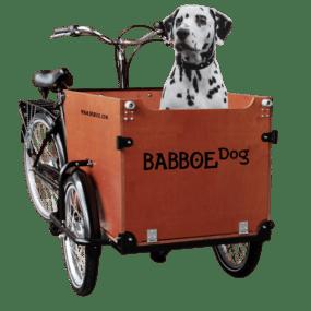 _MG_8825met hond
