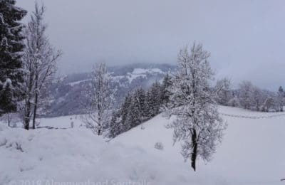 Winter und schneebedeckte Bäume