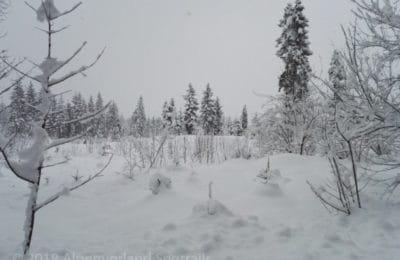 Schnee im Wald und dichtes Schneetreiben
