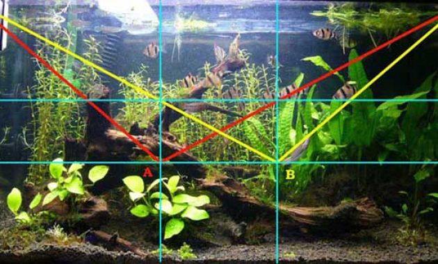 Understanding the Golden Ratio in the Aquascape
