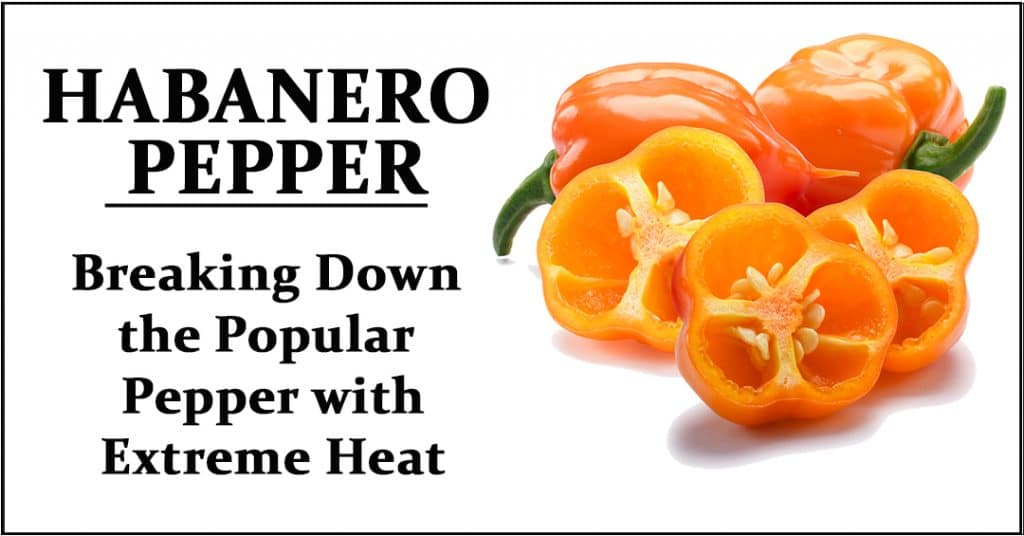 What is a Habanero Pepper?