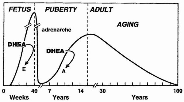 DHEA - does it have any beneficial non-hormonal effects?