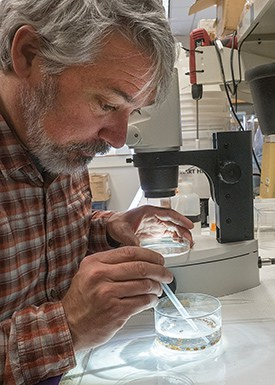 """Jamie Pierson, an assistant professor at the Horn Point Laboratory, wields a pipette to capture a single copepod for examination under a microscope. """"They're probably the most numerous animal on earth,"""" he said. """"Anywhere you've got water, you have copepods."""" (Photo: Dave Harp)"""
