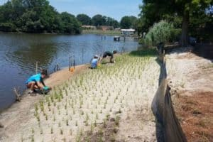 James River Gets $1 Million for Living Shorelines