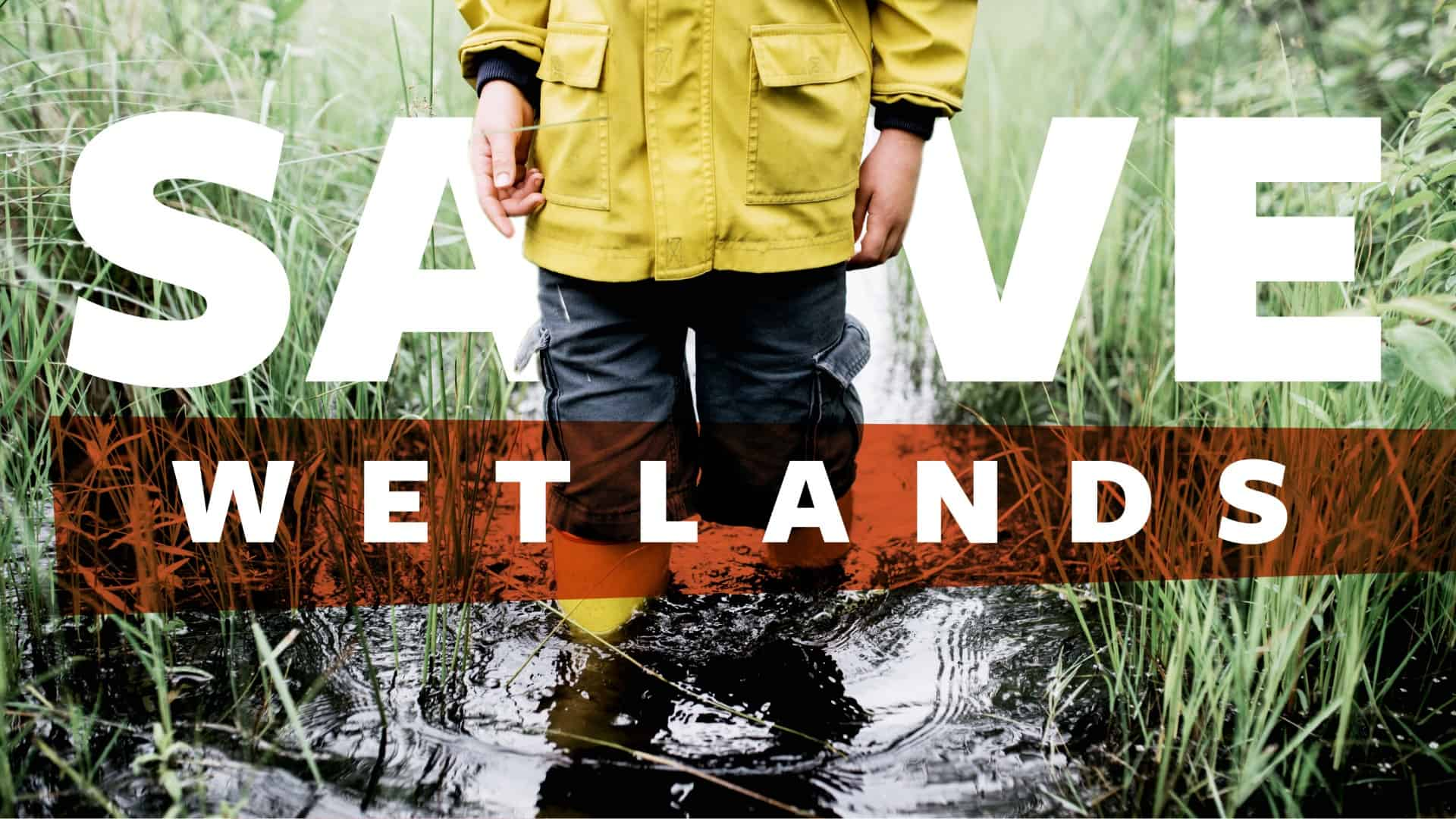 Save The Wetlands - Creative Design - Citizen Best