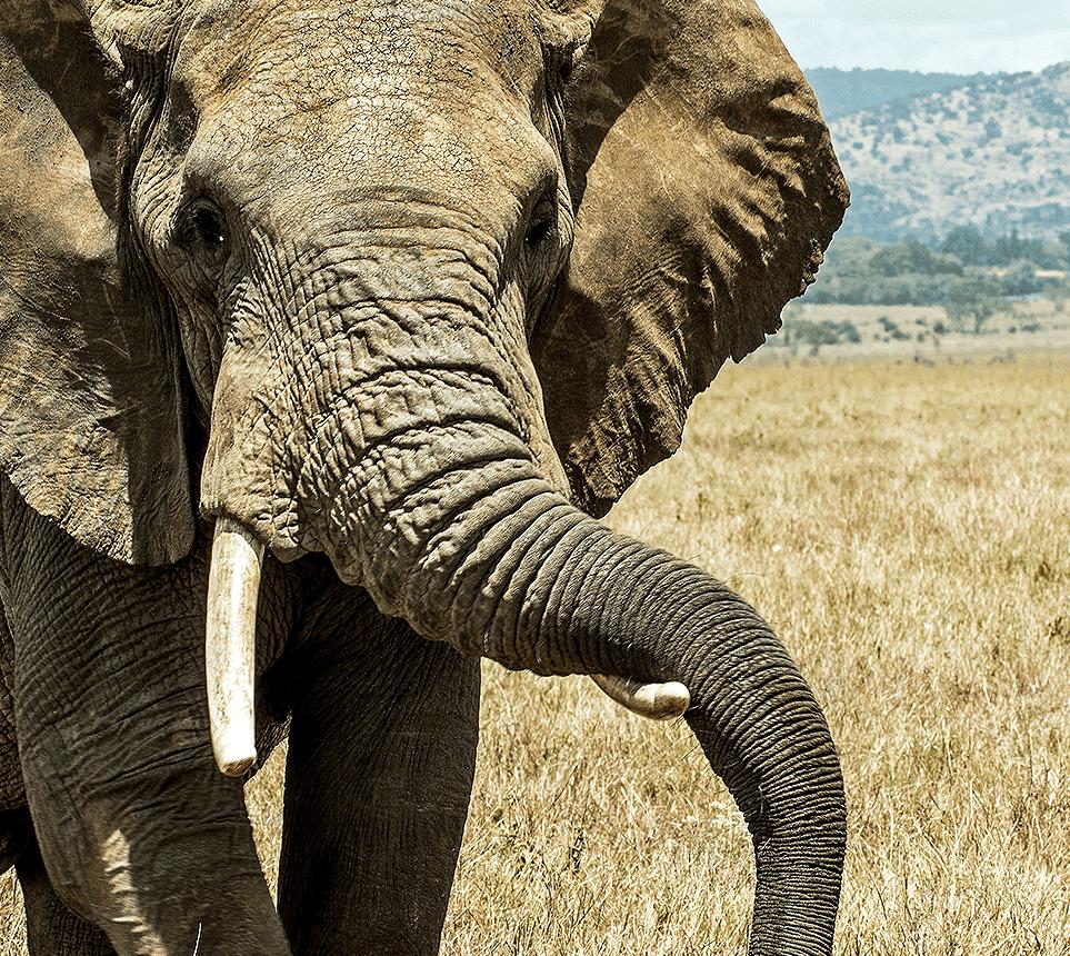 Dreaming Elephants website design