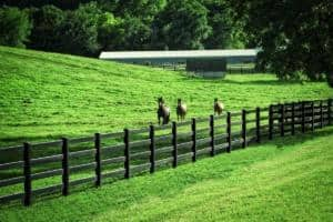 blackline ranch horse fence 15