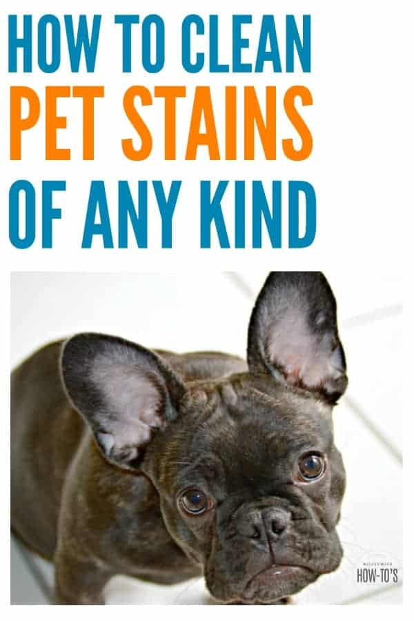 How To Clean Pet Stains Get The Spot And Smell Out Too