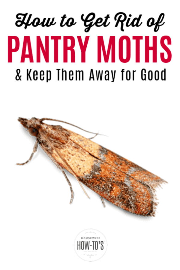 How to Get Rid of Pantry Moths and Keep Them Away for Good