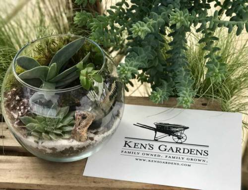 Succulent Presentation at Country Gardener's Club
