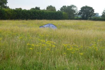 Camping Tent pitches hidden away in the Meadow