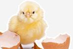 خمسة أسباب لعدم تناول البيض