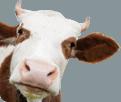 خمسة أسباب للامتناع عن تناول اللحم