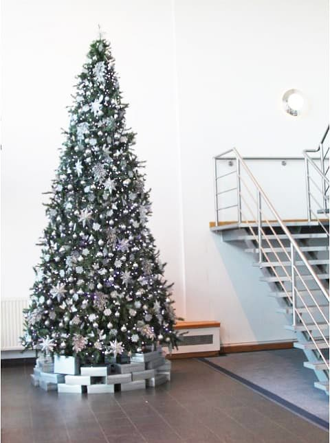 Christmas-tree-hire-