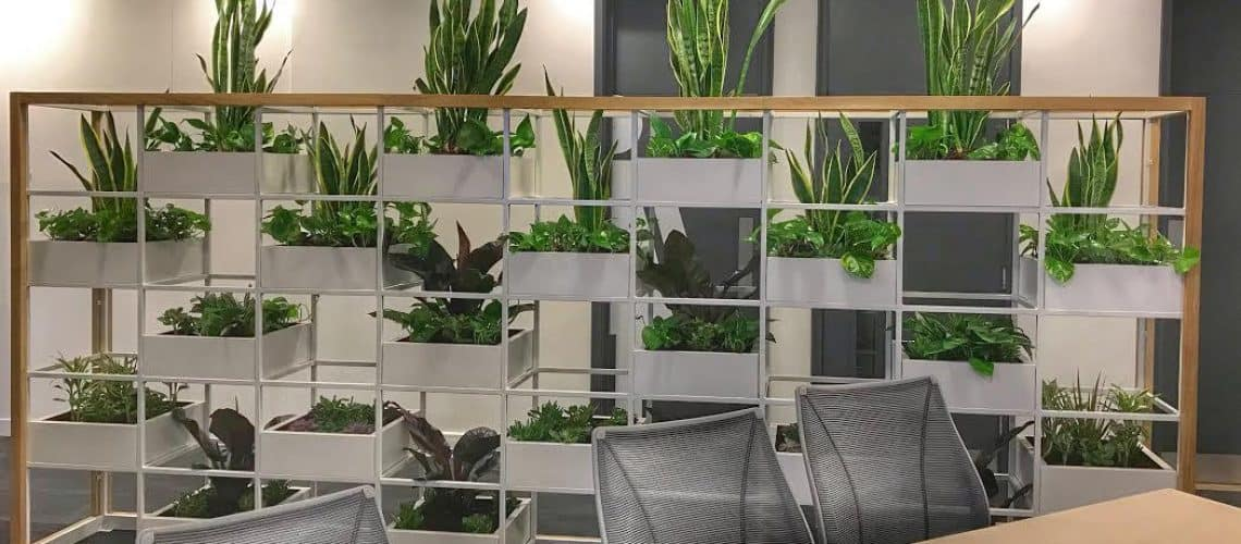 Best Office Plants For Offices With No Windows