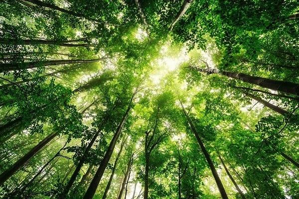 تور جنگل راش سوادکوه